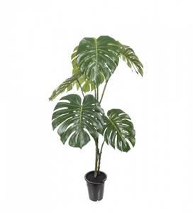 Bilde av Mr. Plant - Monstera plante 18 cm