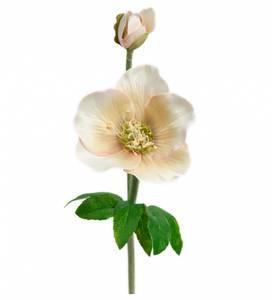Bilde av Mr. Plant - Julerose 36 cm  hvit/rosa